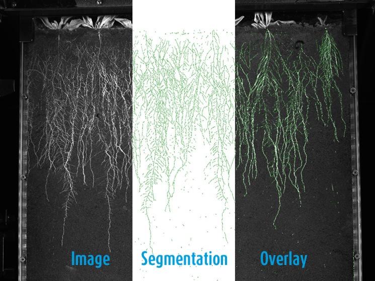 growscreen rhizo segmenting