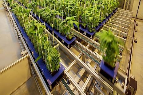 conveyor scanalyzer lemnatec greenhouse